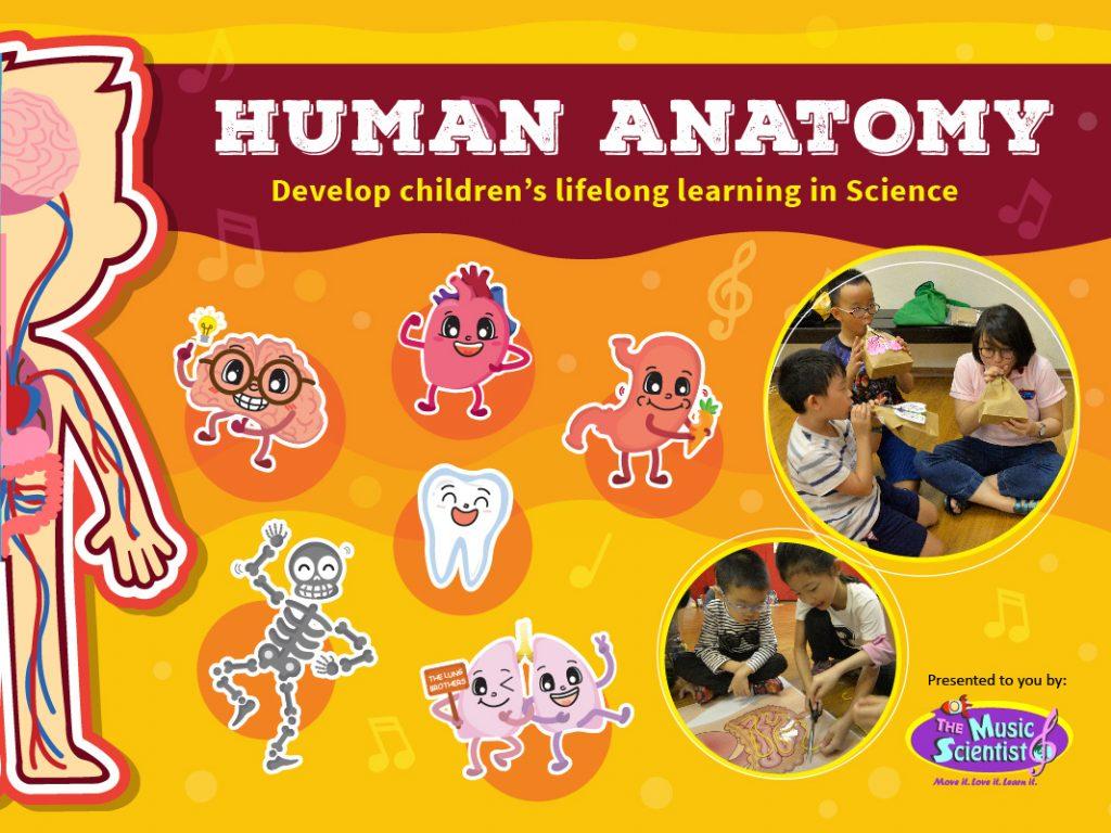 Human Anatomy Workshops The Music Scientist